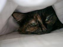 Katt under räkningarna Fotografering för Bildbyråer
