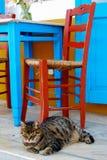Katt under stol och tabellen royaltyfri foto