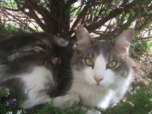 Katt under träd Arkivbild