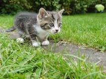 Katt utanför Royaltyfria Foton