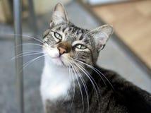 Katt utanför Arkivbild
