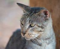 katt utomhus Fotografering för Bildbyråer