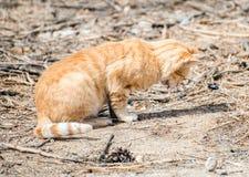 katt utomhus Arkivbilder