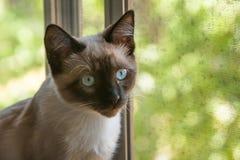 Katt vid fönstret Royaltyfri Fotografi