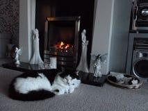 Katt vid härden Royaltyfri Foto