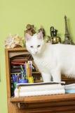Kattanseende på anteckningsböckerna på handstilskrivbordet Arkivbild