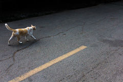 Kattarbete på gatan Royaltyfri Bild