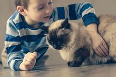 Kattbarnbalinese tillsammans att spela Djur affektion royaltyfria foton