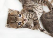 Kattbarnet rasar med bröderna royaltyfri fotografi