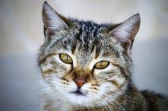 Kattbilder, gulliga kattbilder, öga för katt` s, de mest härliga kattögonen Royaltyfri Bild