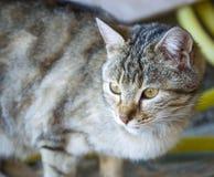 Kattbilder, gulliga kattbilder, öga för katt` s, de mest härliga kattögonen Arkivfoton