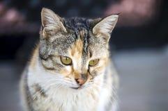 Kattbilder, gulliga kattbilder, öga för katt` s, de mest härliga kattögonen Arkivbilder