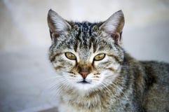 Kattbilder, gulliga kattbilder, öga för katt` s, de mest härliga kattögonen Royaltyfria Bilder