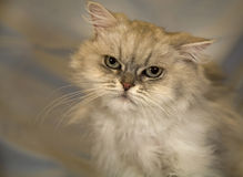 kattcommonhus Royaltyfri Fotografi