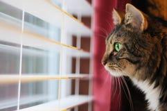 kattdag som ut ser fönstret Royaltyfri Foto