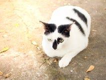 kattdjur Fotografering för Bildbyråer