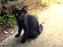 kattdjur Arkivfoto