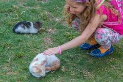 Katten älskar den söta lilla blonda flickan Royaltyfria Foton