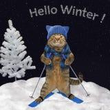 Katten är att skida som är sluttande arkivbilder
