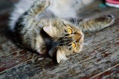 Katten är mycket gullig Royaltyfri Fotografi