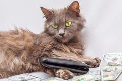 Katten är nära en hög av dollarhåll en handväska i hans händer B royaltyfria bilder