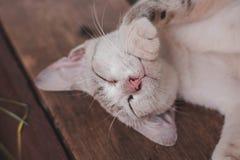 Katten är sömnar arkivfoton