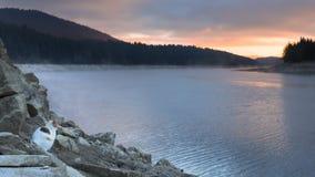 Katten är stirrig soluppgång över en sjö Royaltyfri Foto