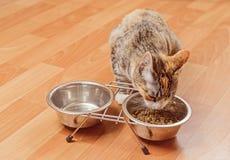 Katten äter från en bunke Arkivbilder