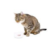 Katten äter från en bunke Royaltyfri Fotografi