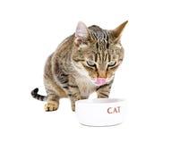 Katten äter från en bunke Fotografering för Bildbyråer