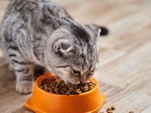 Katten äter torr mat Arkivfoton