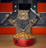 Katten äter torr matning in köket 2 royaltyfria bilder