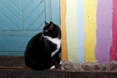 Katten önskar att gå ut Arkivbild