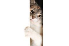 Katten öppnade dörren Arkivbild