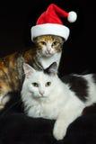 Katten 1 van Kerstmis stock afbeeldingen