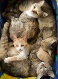 Katten Royalty-vrije Stock Foto