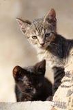 Katten Royalty-vrije Stock Foto's
