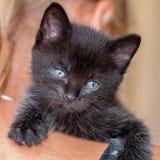 Katten Royaltyfri Fotografi