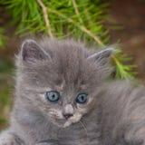 Katten Royaltyfri Bild