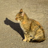 Katten Arkivbilder