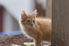 katten Stock Foto's