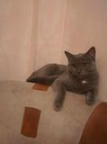 Katten! Royalty-vrije Stock Foto