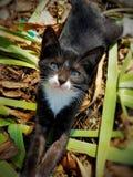 katten Royalty-vrije Stock Afbeelding