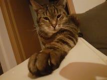 Katten Royaltyfria Bilder