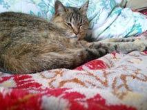 Katten Arkivfoto
