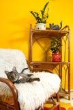 Katten Stock Foto