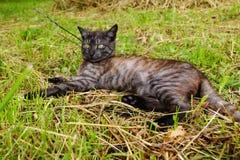 Katten Royaltyfria Foton