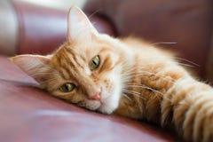 Katten absorberades på något. Royaltyfri Fotografi