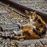 Katten beskådar arkivfoton