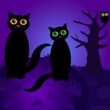 Katten bij nacht Stock Foto